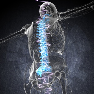 3d render medical illustration of the painful back